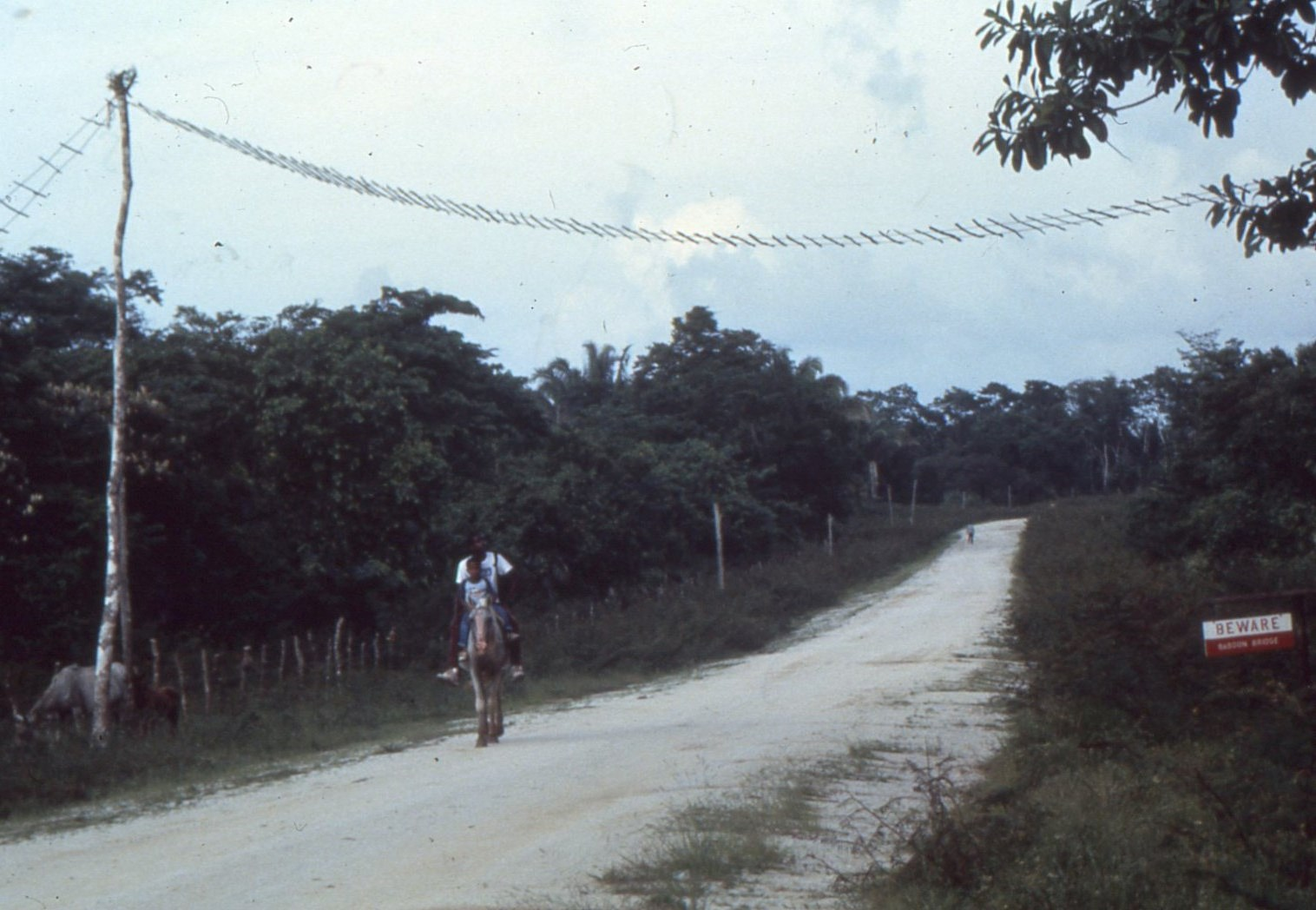 http://memoriam.communityconservation.org/Baboon Bridge at Bermudian Landing 1988.jpg